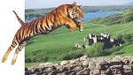 Рывок «кельтского тигра»