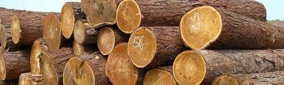 Торговля лесом и пиломатериалами