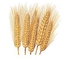 Поставки российского зерна на мировой рынок в 2011-2012